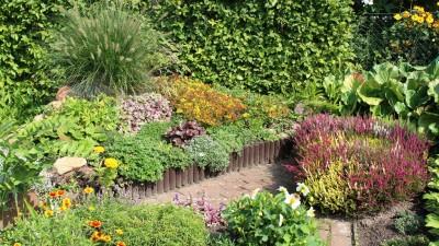 Drugi przegląd odródków - Najpiękniejszy ogródek Wąbrzeźna - 2017 r (98)