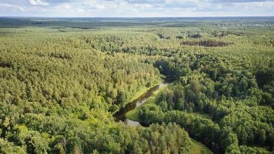 Lasy Brodnica