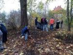 Uczniowie SP 2 w Wąbrzeźnie zbierają liscie kasztanowców,by je spalić wraz z poczwarkami szrotówka kasztanowcowiaczka. Listopad 2018 r.Fot. SP 2(5)